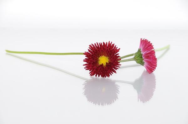 Blomster på plexiglas